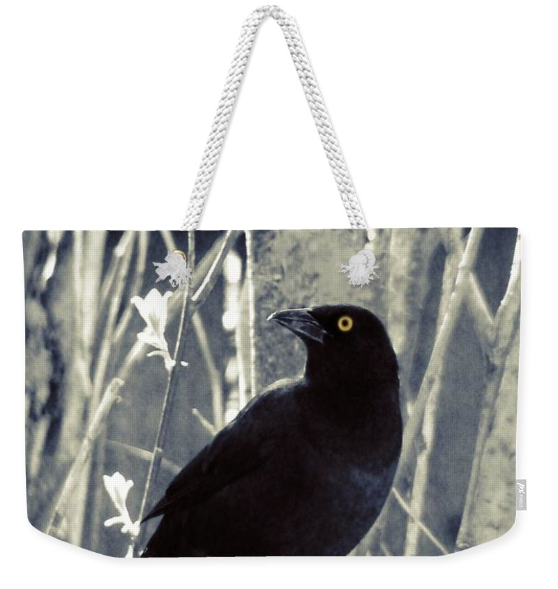 Quiscalus Weekender Tote Bag featuring the photograph Waiting Grackle by Gothicrow Images