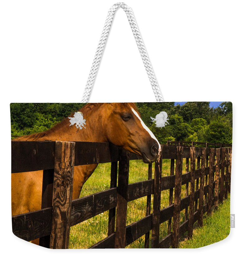 Wait Weekender Tote Bag featuring the photograph Waiting Patiently by Scott Hervieux