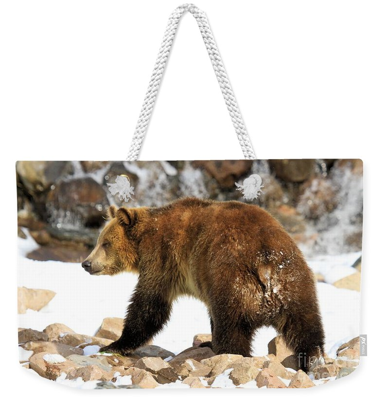 Grizzly Bear Weekender Tote Bag featuring the photograph Walking On The Rocks by Adam Jewell