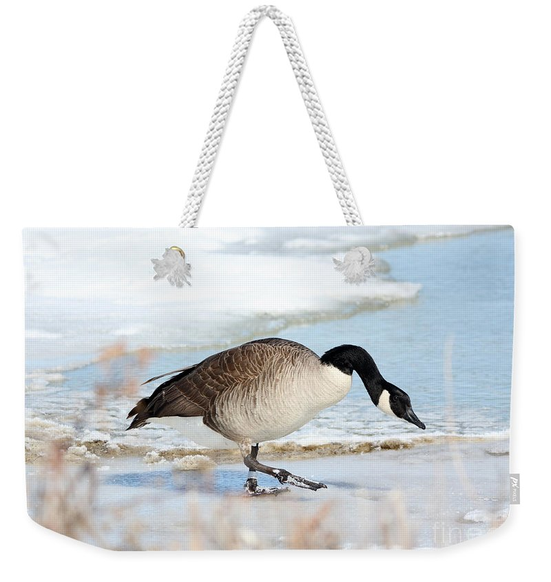 Wildlife Weekender Tote Bag featuring the photograph Walking On The Snow by Lori Tordsen