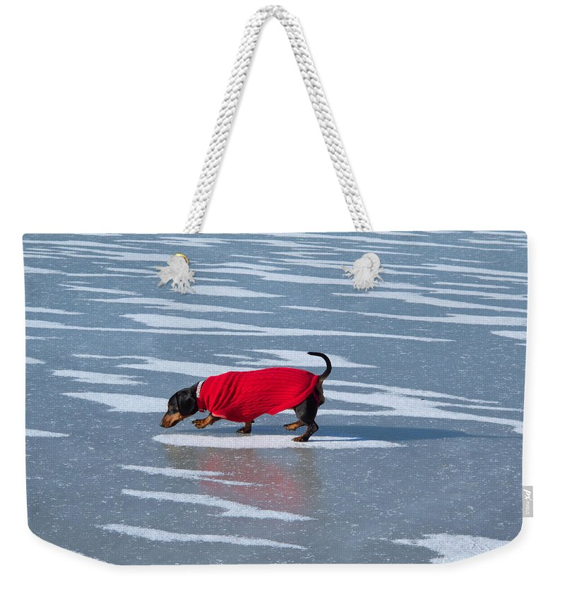 Dachshund Weekender Tote Bag featuring the photograph Walking On Water by Ann Horn