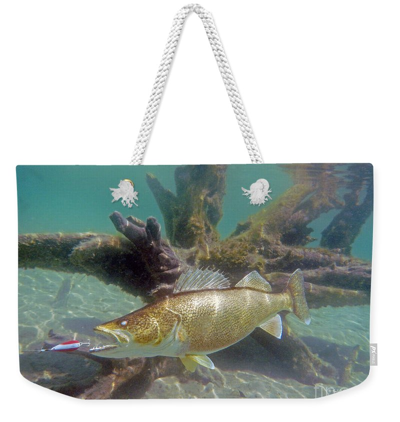 Fish Paintings Weekender Tote Bag featuring the mixed media Walleye And Dardevle by Paul Buggia