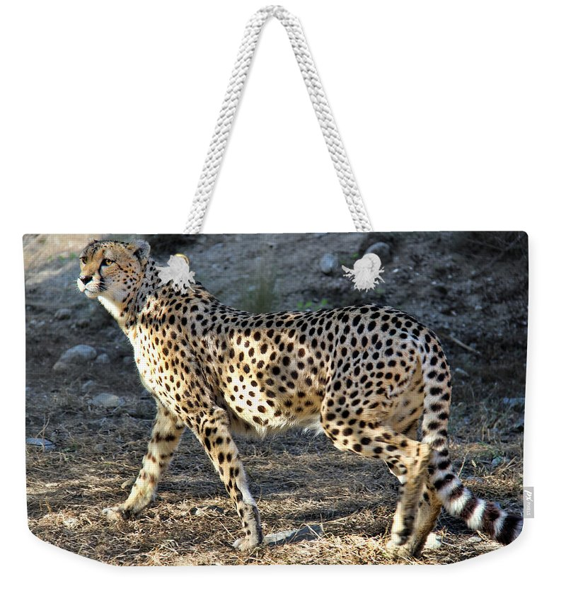 Wandering Cheetah Weekender Tote Bag featuring the photograph Wandering Cheetah by Mariola Bitner