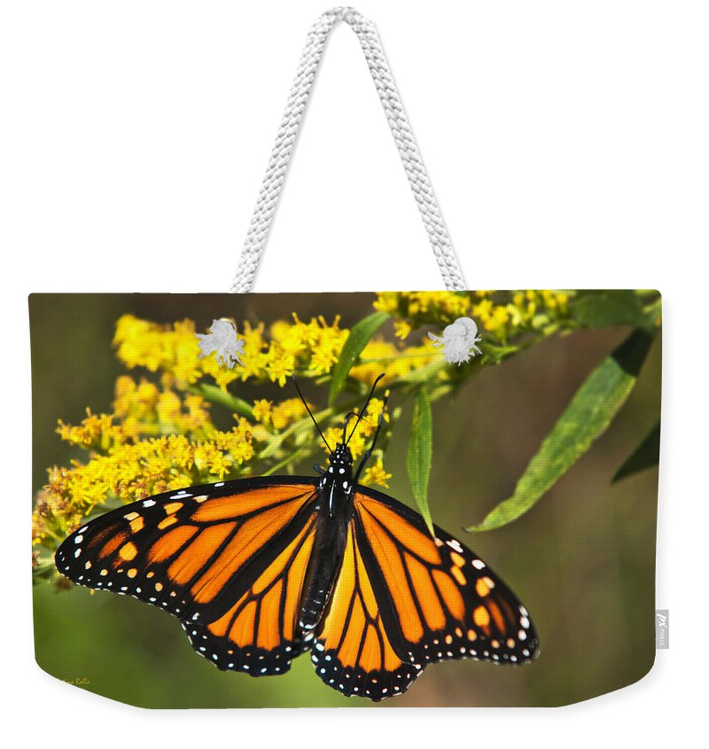 Monarch Butterfly Weekender Tote Bag featuring the photograph Wandering Migrant Butterfly by Christina Rollo