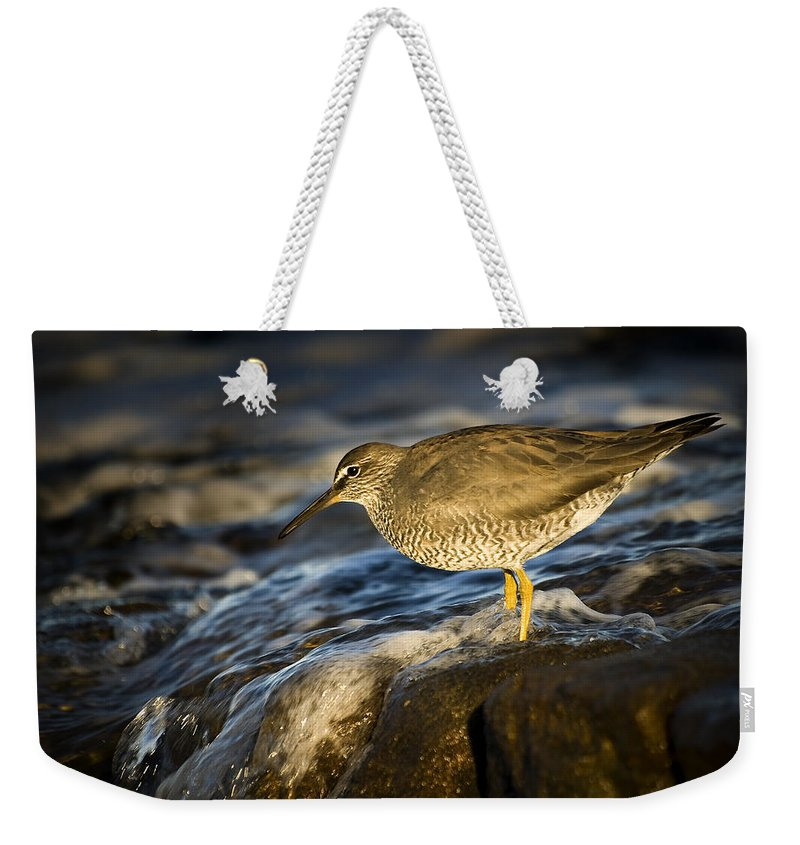 Bird Weekender Tote Bag featuring the photograph Wandering Tattler by Tony Steinberg