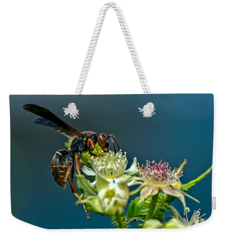 Wasps Weekender Tote Bag featuring the photograph Wasp by Bob Orsillo