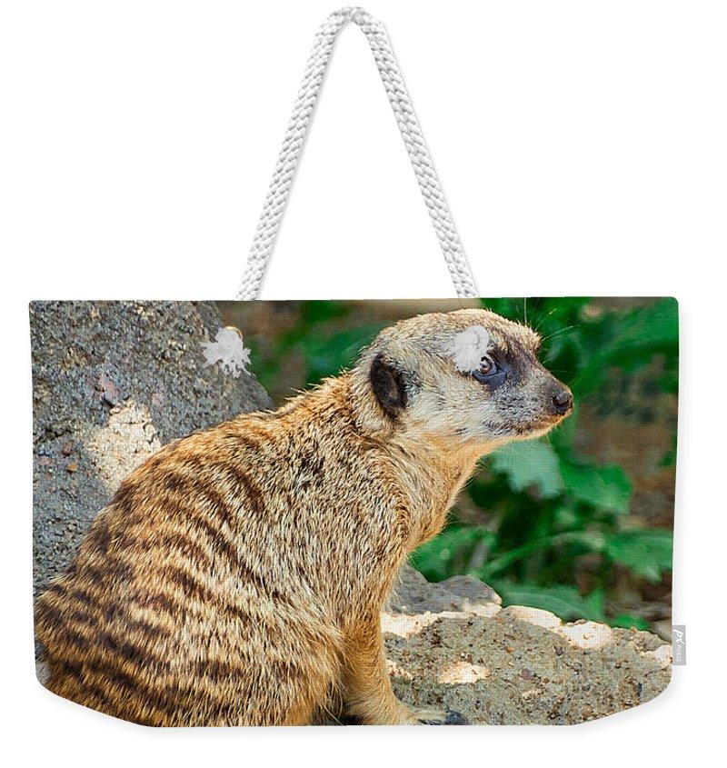 Meerkat Weekender Tote Bag featuring the photograph Watchful Meerkat Vertical by Jon Woodhams