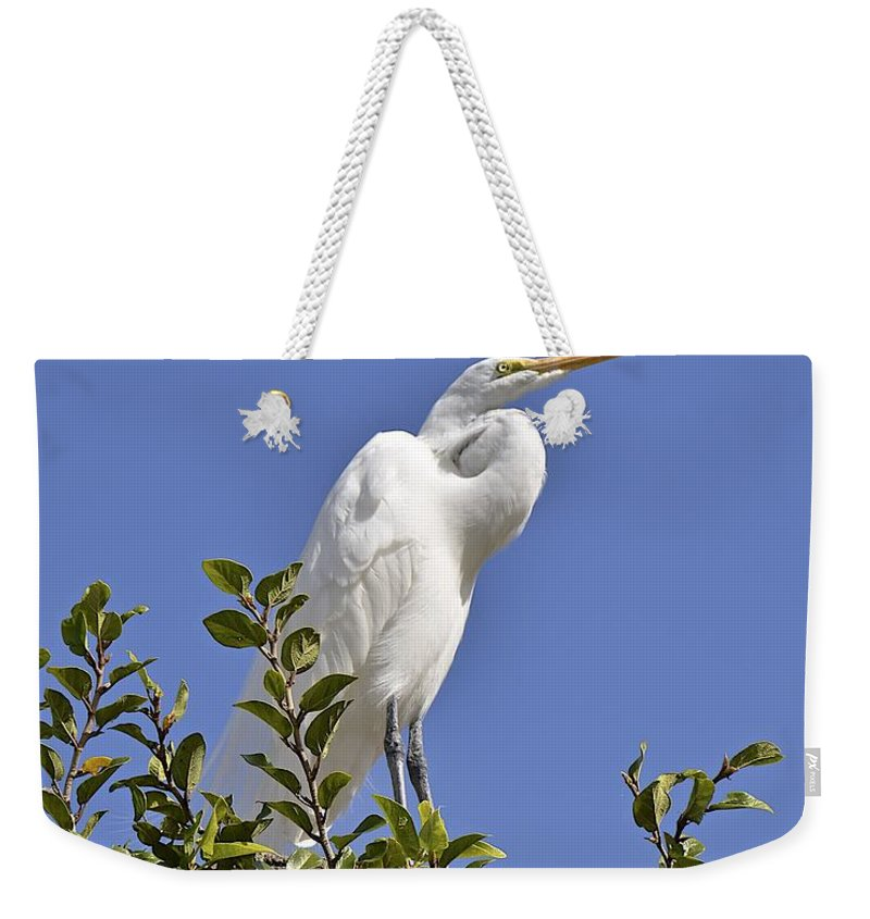 Egret Weekender Tote Bag featuring the photograph Watching by Carol Bradley