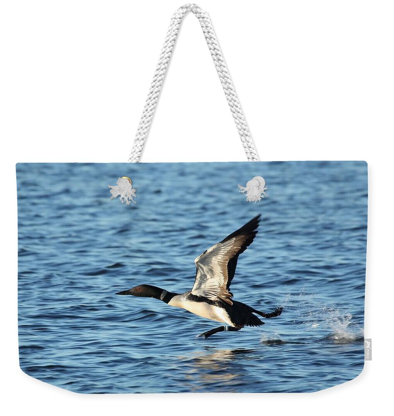 Common Loon Weekender Tote Bag featuring the photograph Water Ballet by Teresa McGill