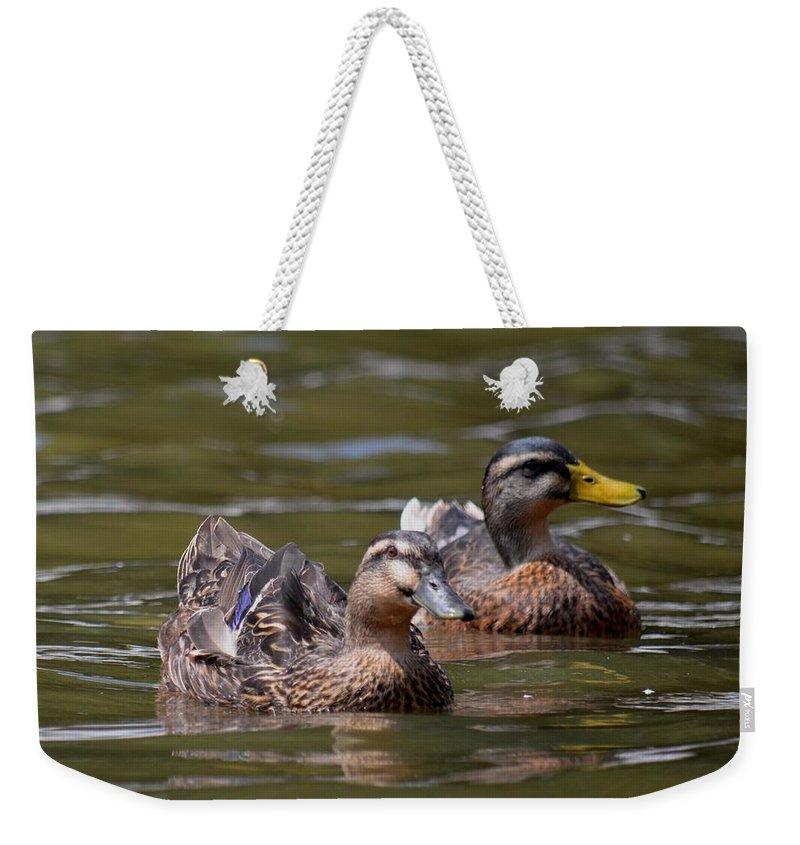 Water Buddies - Female Mallards Weekender Tote Bag featuring the photograph Water Buddies - Female Mallards by Maria Urso
