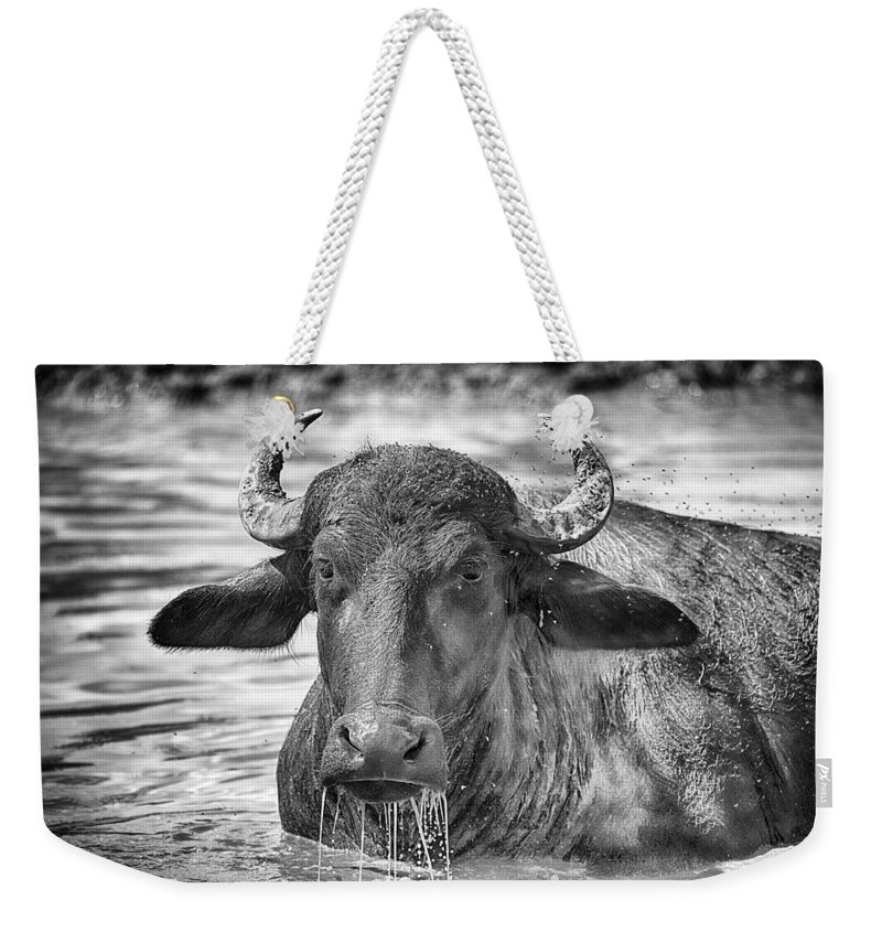 Water Buffalo Weekender Tote Bag featuring the photograph Water Buffalo-black And White by Douglas Barnard