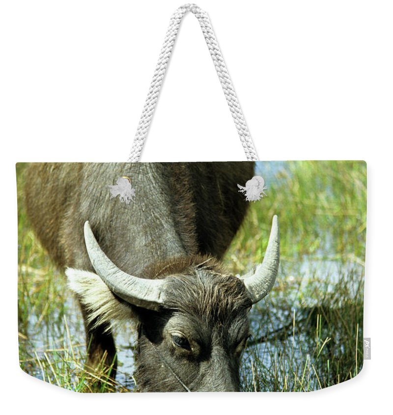 Cambodia Weekender Tote Bag featuring the photograph Water Buffalo by Rick Piper Photography