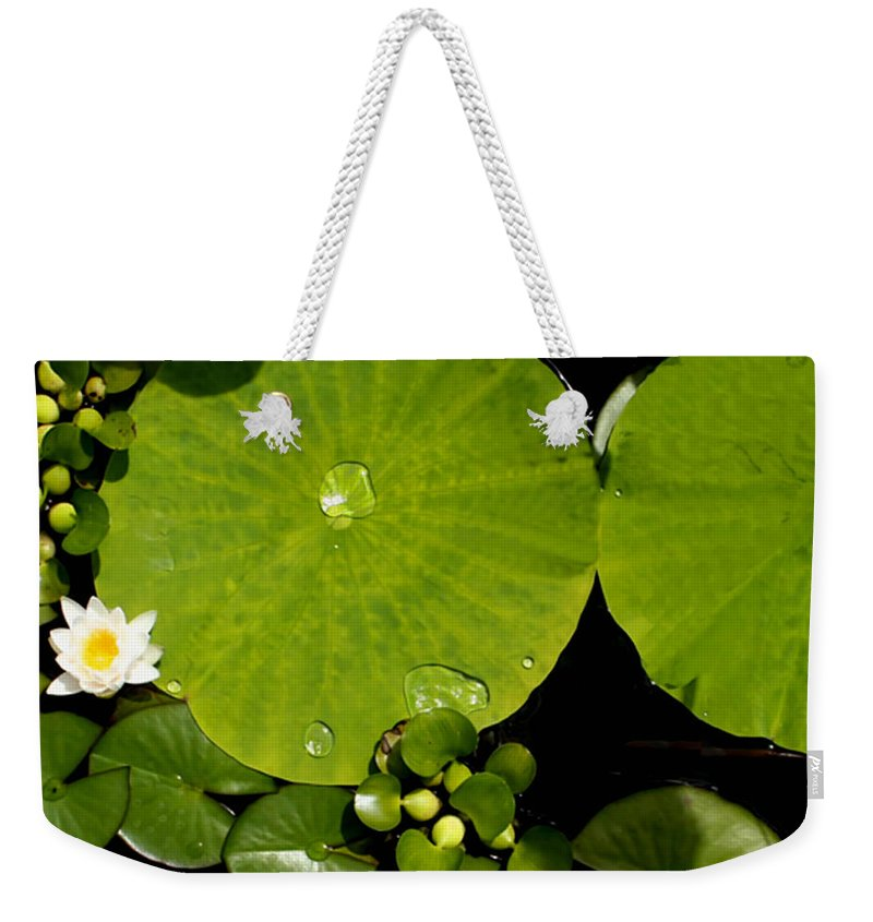 Lily Pad Photograph Weekender Tote Bag featuring the photograph Water Drops Bristol Rhode Island by Tom Prendergast