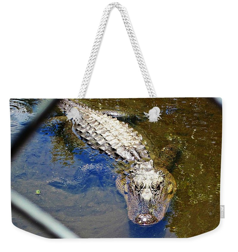Gator Weekender Tote Bag featuring the photograph Water Hole Gator by MTBobbins Photography