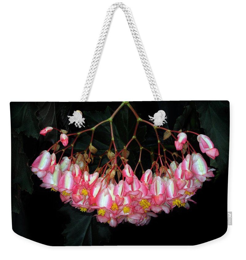 Begonia Weekender Tote Bag featuring the photograph Wax Begonia by Dave Mills