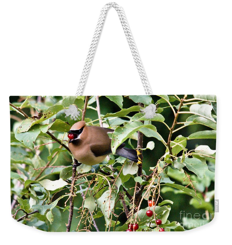 Cedar Waxwing Weekender Tote Bag featuring the photograph Waxwing Meal by Cheryl Baxter