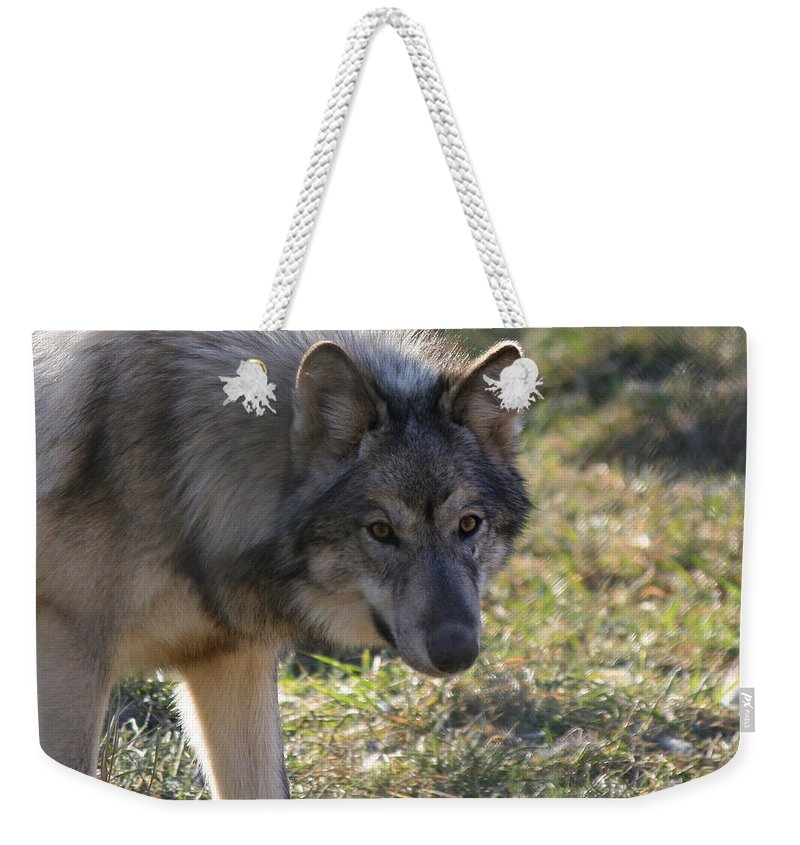 Wolf Weekender Tote Bag featuring the photograph Weary Stance by Neal Eslinger