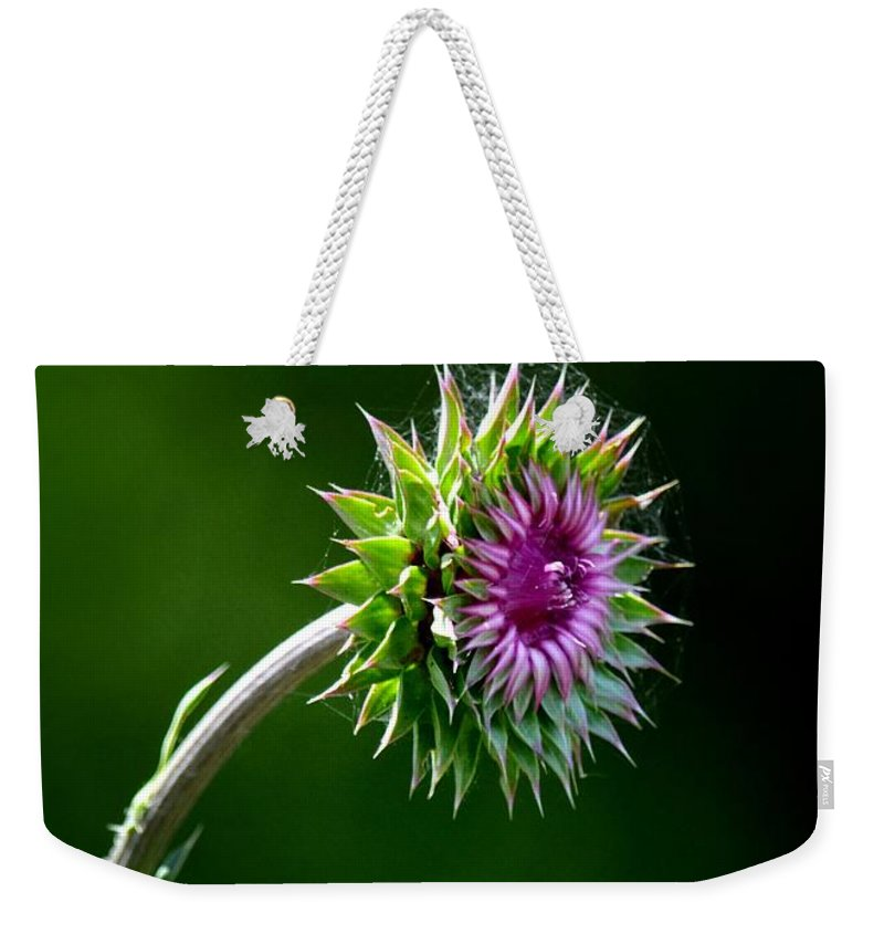Webbed Thistle Weekender Tote Bag featuring the photograph Webbed Thistle by Maria Urso