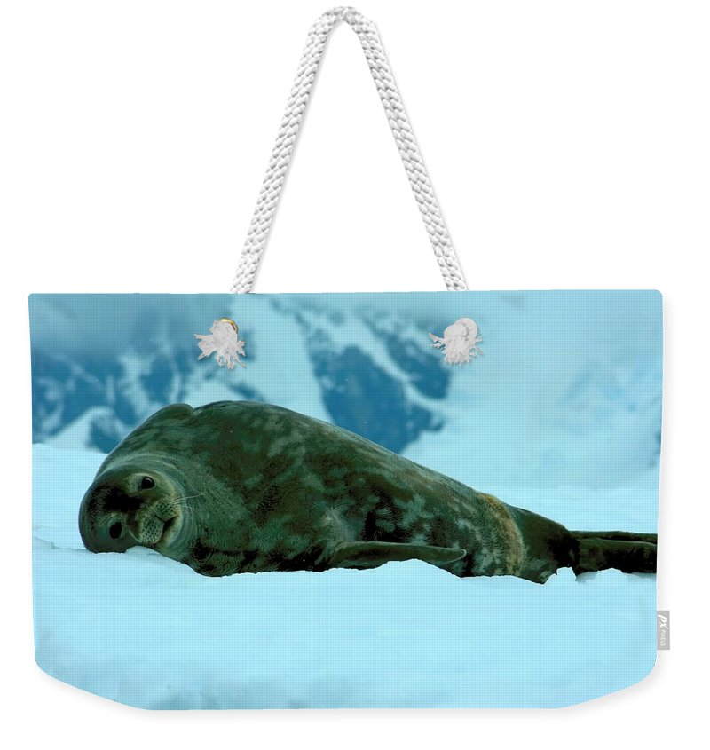 Weddell Seal Weekender Tote Bag featuring the photograph Weddell Seal by Amanda Stadther