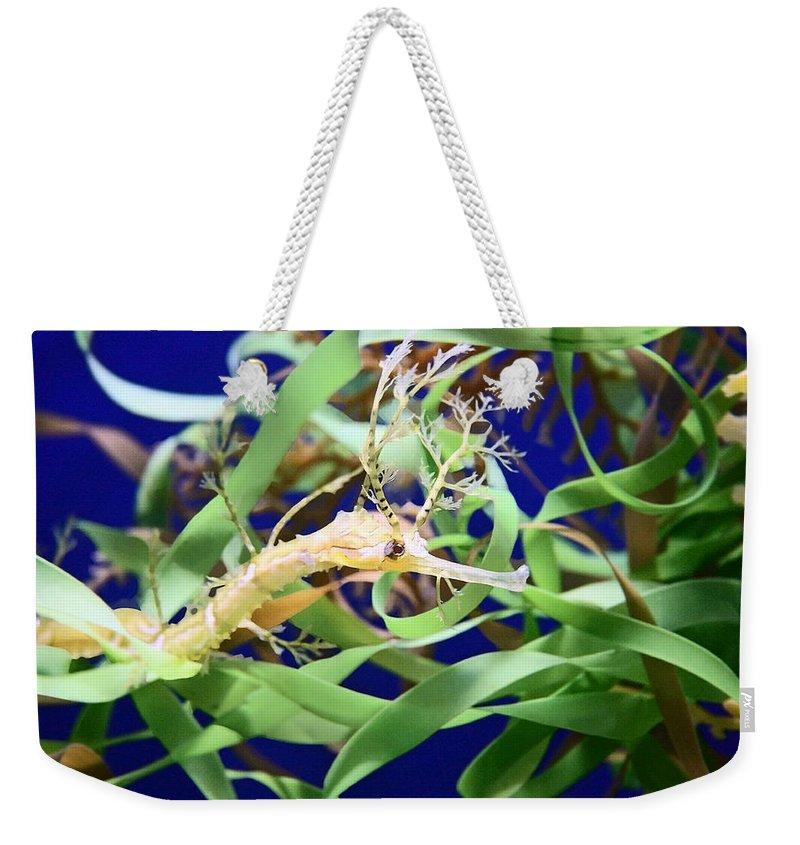 Weedy Sea Dragon Weekender Tote Bag featuring the photograph Weedy Sea Dragon by Ellen Henneke