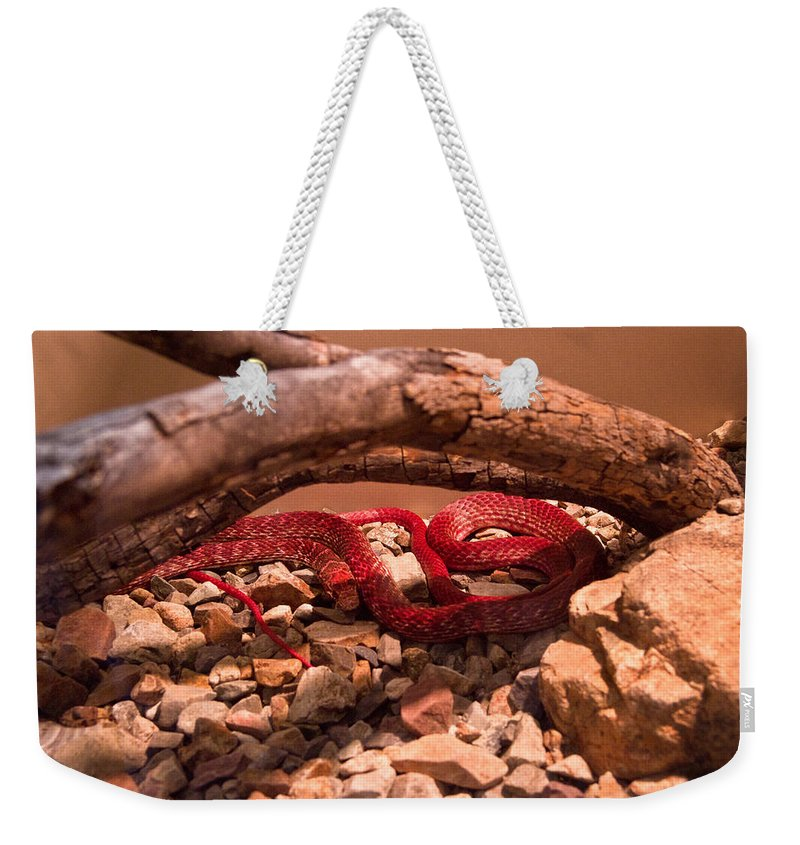 Western Weekender Tote Bag featuring the photograph Western Coachwhip Red Phase by Douglas Barnett