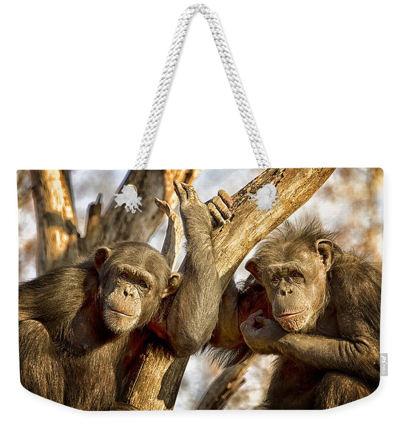 Chimpanzee Weekender Tote Bag featuring the photograph Western Lowland Gorillas by Linda Tiepelman