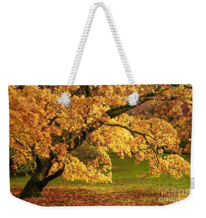 Westonbirt Weekender Tote Bag featuring the photograph Westonbirt Arboretum by Amanda Elwell