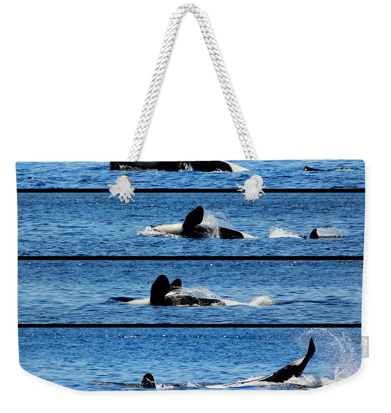 Whale Weekender Tote Bag featuring the photograph Whale Of A Time by Traci Law