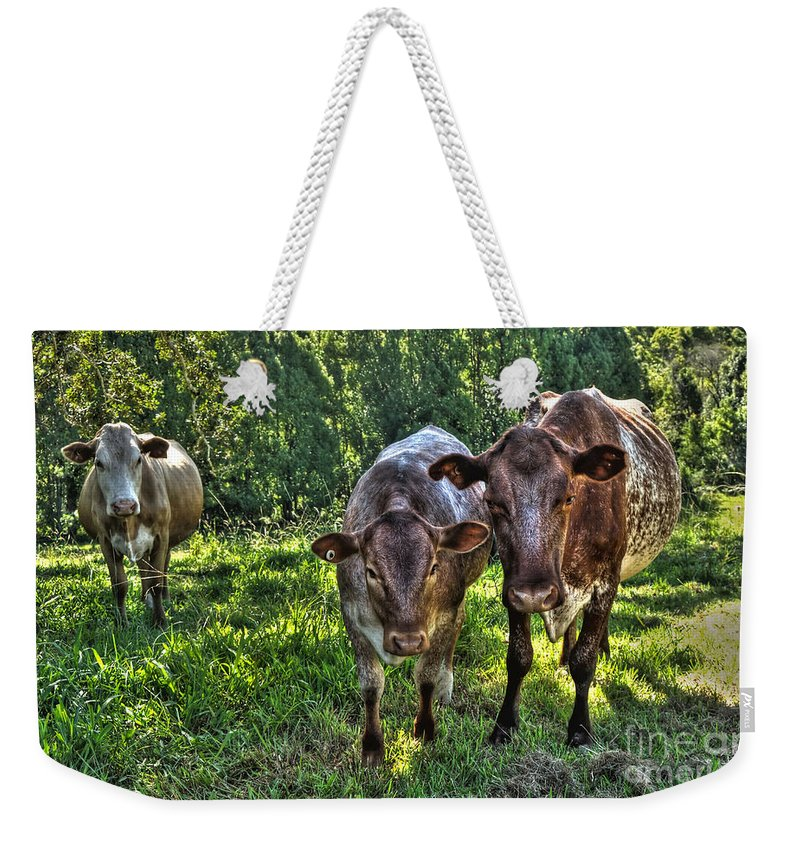 Photography Weekender Tote Bag featuring the photograph What You Looking At? by Kaye Menner