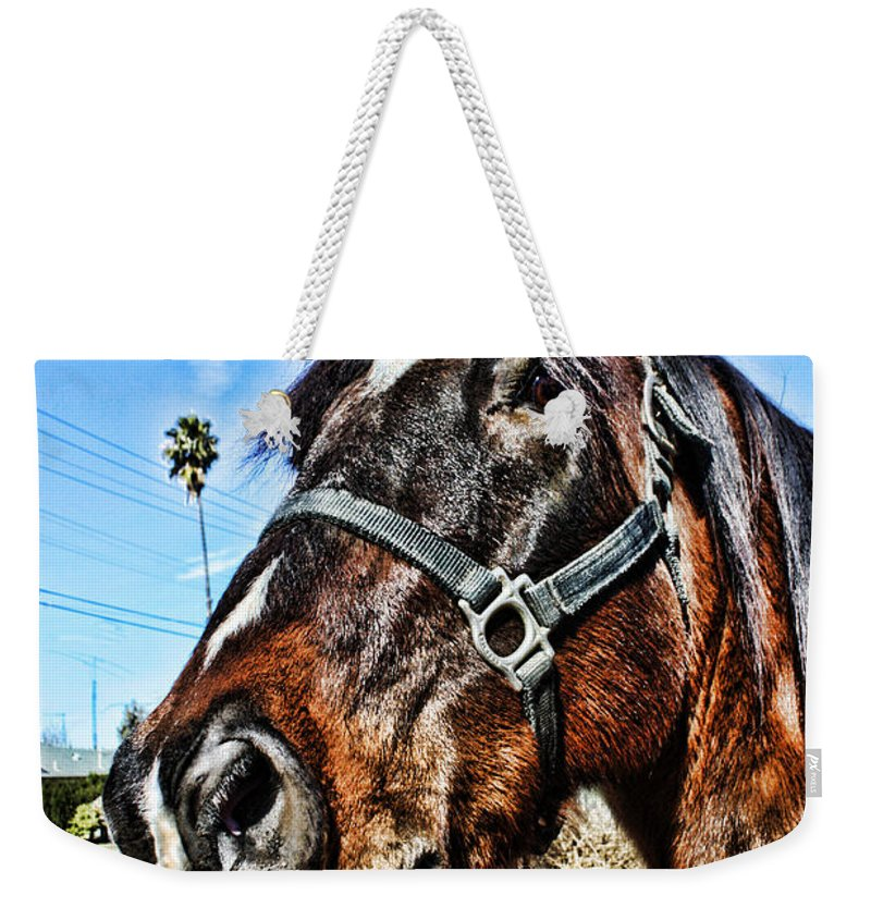 Horse Weekender Tote Bag featuring the photograph What You Looking At by Tommy Anderson