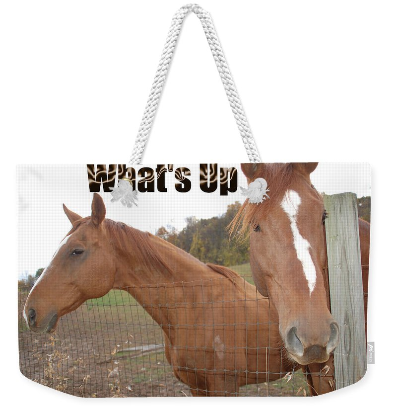 Horse Weekender Tote Bag featuring the photograph What's Up by Aimee L Maher ALM GALLERY