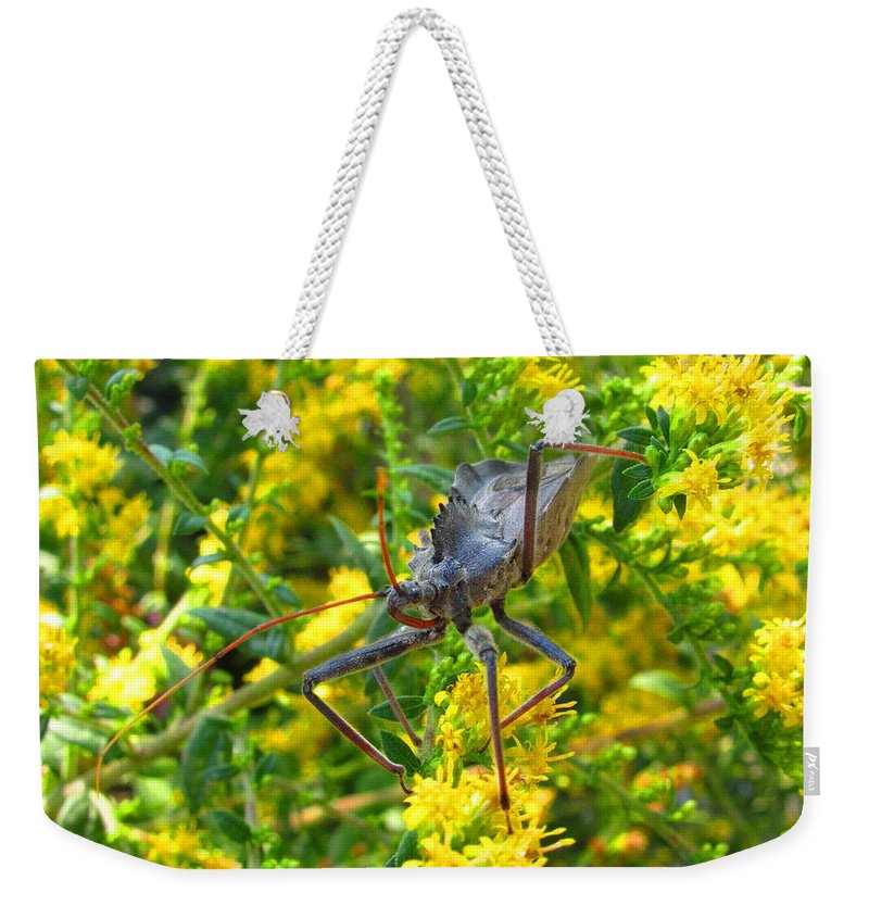 Assasin Bug Wheel Bug Natural Science Preservation Meadow Habitat Conservation Rare North American Insects Predatory Insects Insect Nightmare True Bug Forest Creatures Meadow Creatures Maryland Insects Spike Backed Insect Stinging And Biting Insects Valuable Ecological Resource Naturalist Nature Photography Wildlife Habitat Lifeform Alive Living Being All Creatures Great And Small Macro Photography Images Razor Backed Insects Weekender Tote Bag featuring the photograph Wheel Bug by Joshua Bales