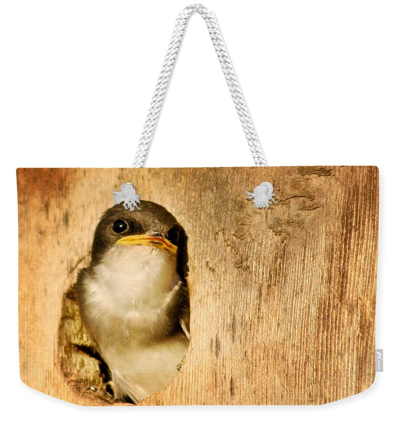 Bird Weekender Tote Bag featuring the photograph Wheres Dinner by Jean Noren