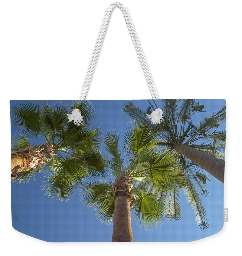 Palm Trees Weekender Tote Bag featuring the photograph Which One Doesnt Belong 2 by Scott Campbell