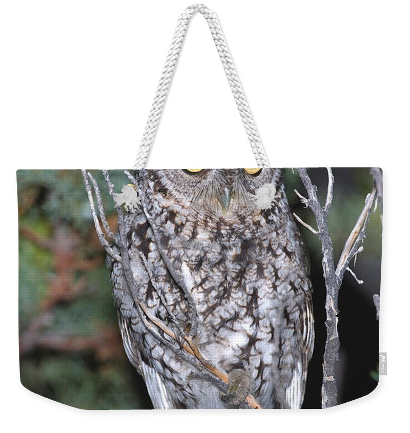 Megascops Trichopsis Weekender Tote Bag featuring the photograph Whiskered Screech Owl by Anthony Mercieca