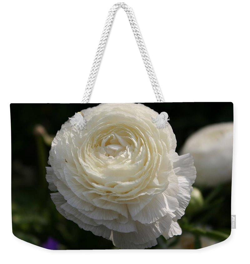 White Buttercup Weekender Tote Bag featuring the photograph White Buttercup - Ranunculus by Christiane Schulze Art And Photography