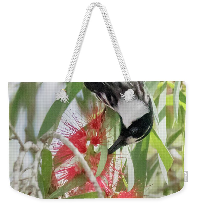 Nature Weekender Tote Bag featuring the photograph White-cheeked Honeyeater Feeding by Hal Beral