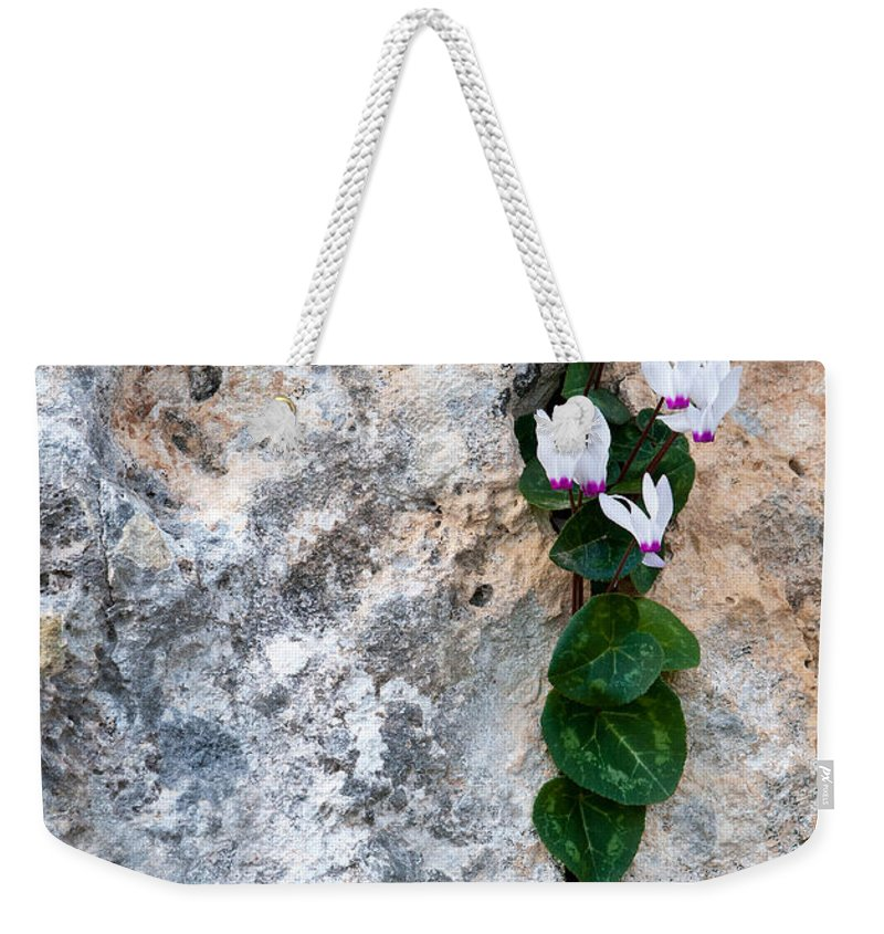 Cyclamen Weekender Tote Bag featuring the photograph White Cyclamen Flowers by Michalakis Ppalis