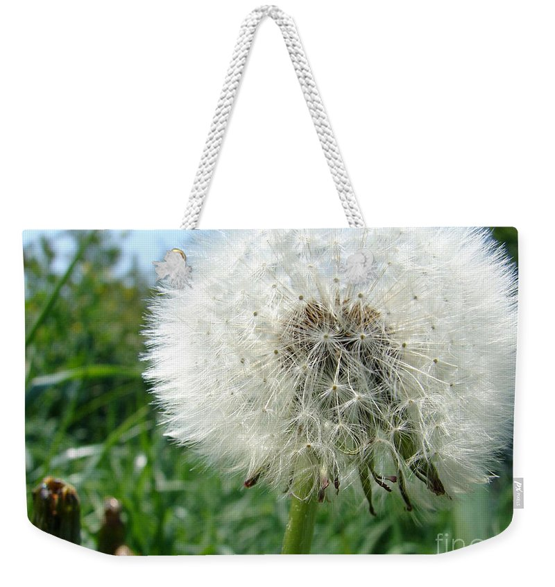 Fluffy Weekender Tote Bag featuring the photograph White Fluffy by Carol Lynch