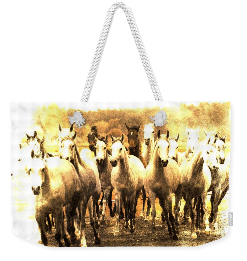 Horse Weekender Tote Bag featuring the photograph White Ghosts by Angel Ciesniarska