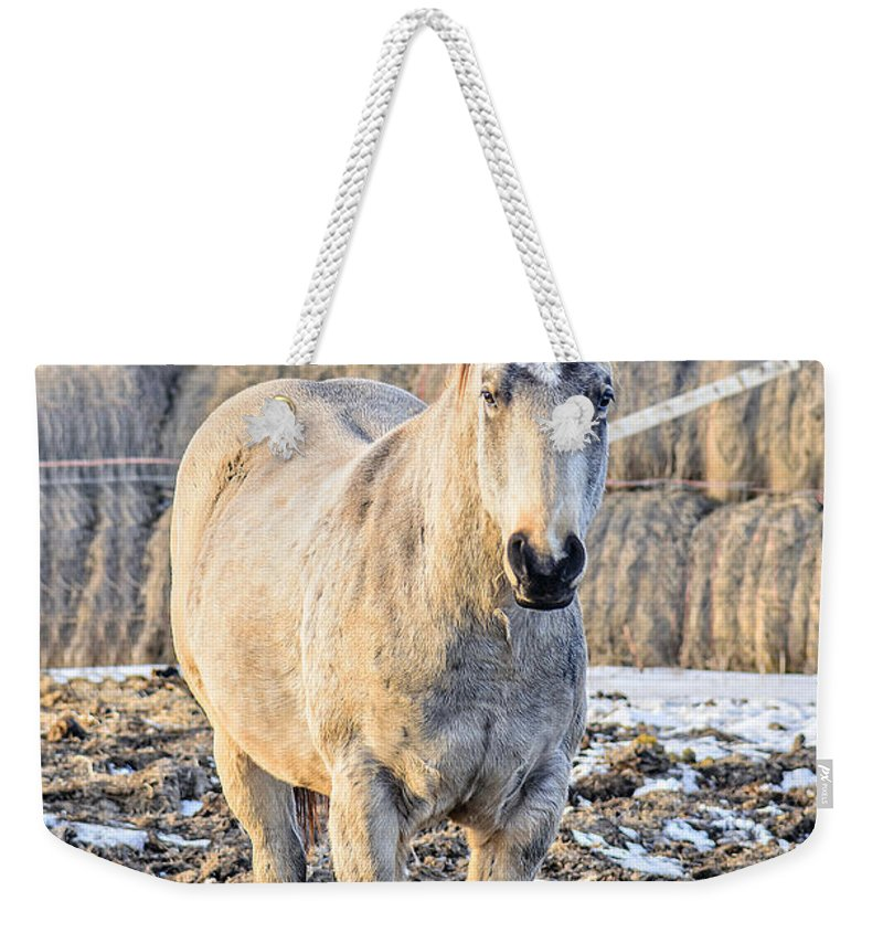 Horse Weekender Tote Bag featuring the photograph White Horse And Hey by Viktor Birkus
