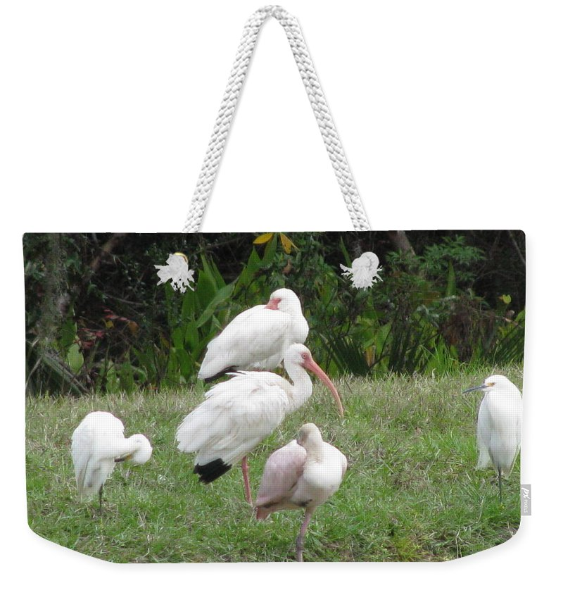 Landscape Weekender Tote Bag featuring the photograph White Ibis Bliss by Ellen Meakin