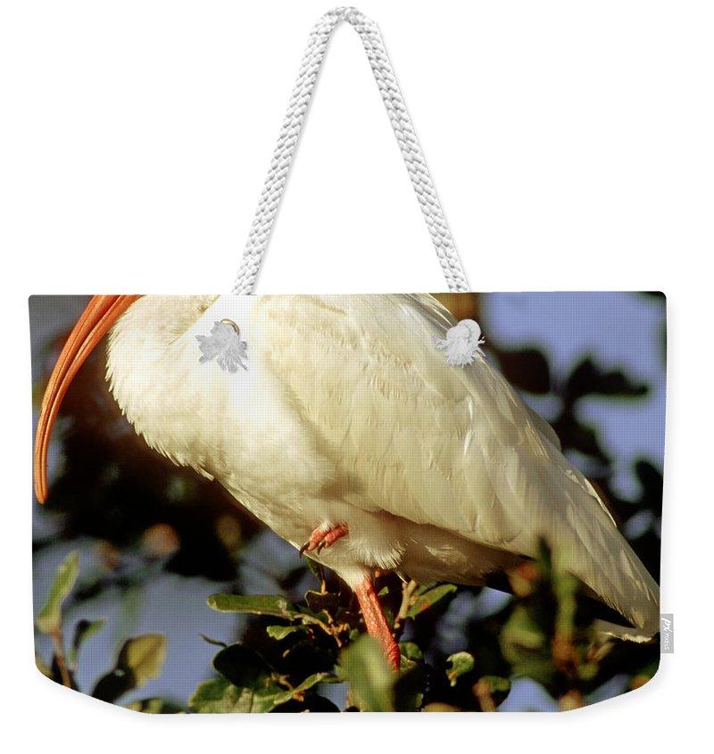 White Ibis Weekender Tote Bag featuring the photograph White Ibis Eudocimus Albus by Millard H. Sharp