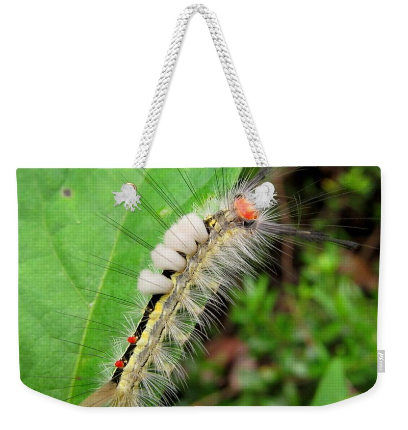 White Marked Tussock Caterpillar Images North American Caterpillars Creatures Of The Forest Colorful Caterpillars Hairy Caterpillars Yellow White Black Red Caterpillars North American Insects Appalachian Caterpillars Maryland Caterpillars Pennsylvania Caterpillars Colorful Bugs Preserve Biodiversity Rare Creatures Of The Forest Beings Of The Woodland Ecosystem Biodiversity Colorful Critters Natural Design In Nature Fine Art Weekender Tote Bag featuring the photograph White Marked Tussock by Joshua Bales