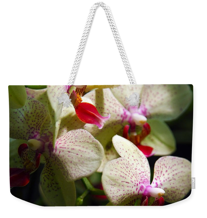 White Orchids Weekender Tote Bag featuring the photograph White Orchids by Ingrid Smith-Johnsen