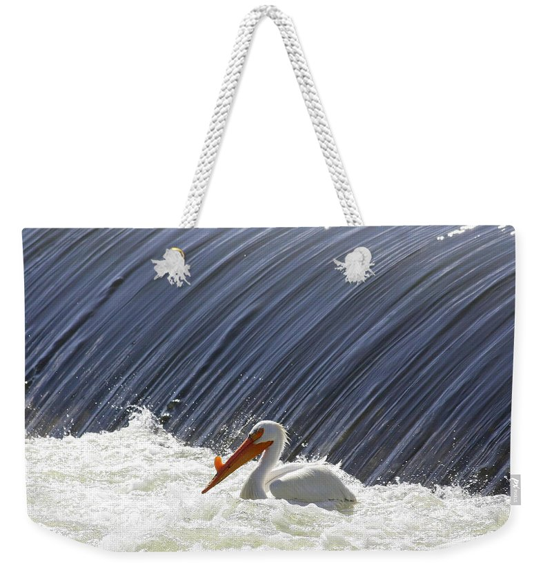 Pelecanus Erythrorhynchos Weekender Tote Bag featuring the photograph White Pelican Over The Dam by Carol Groenen