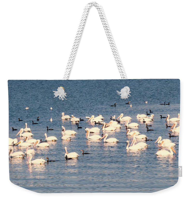 Pelican Weekender Tote Bag featuring the photograph White Pelicans by Zina Stromberg