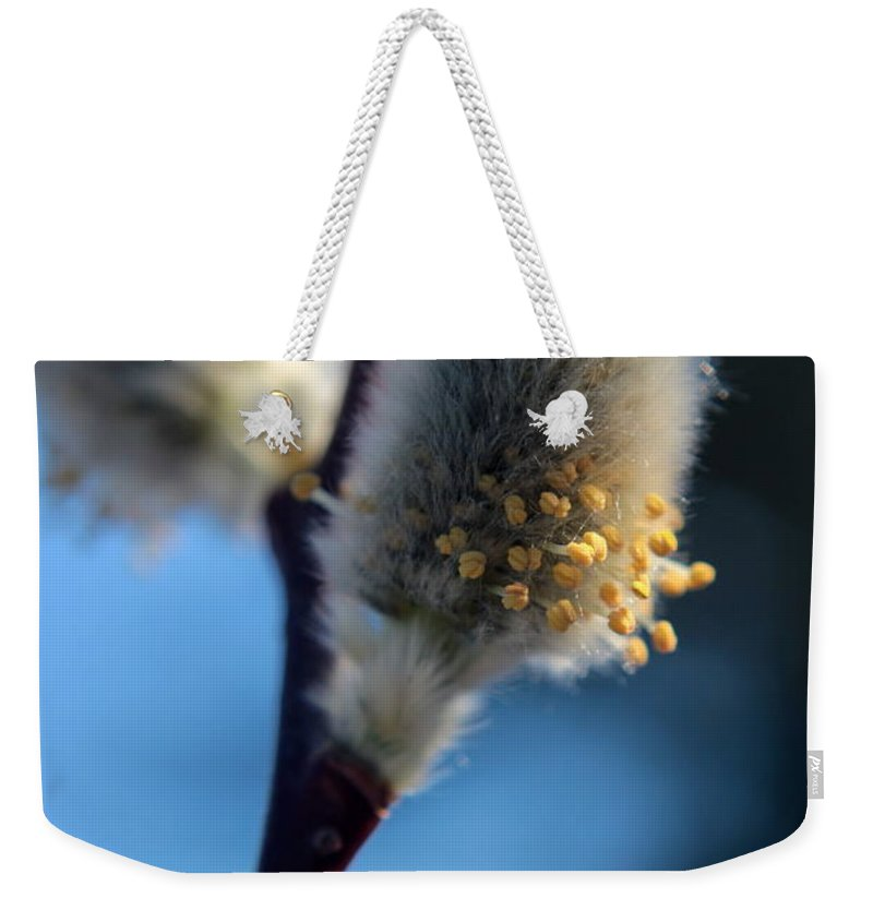 Emergence Weekender Tote Bag featuring the photograph White Pussy Willow In Bloom by Kenny Glotfelty