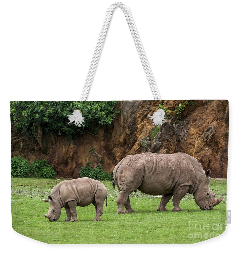 White Rhino Weekender Tote Bag featuring the photograph White Rhino 11 by Arterra Picture Library