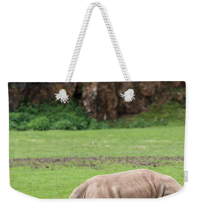 White Rhino Weekender Tote Bag featuring the photograph White Rhino 14 by Arterra Picture Library
